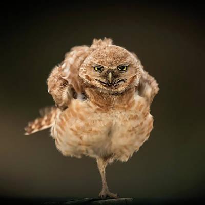 Animals Photograph - Untitled by David H Yang