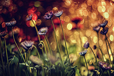 Macro Flower Photograph - Untitled by Dimitar Lazarov -