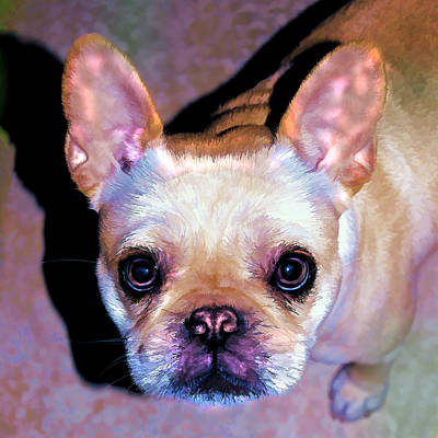 Bullie Photograph - You Had Me At Hello - Too by Donna Proctor