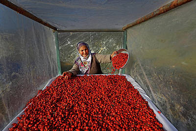 Tomato Photograph - Untitled by Mustafa Zengin