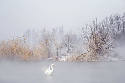 Swan Wall Art - Photograph - Untitled by Uu