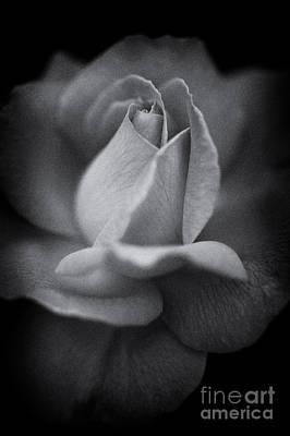 Rosaceae Photograph - Untouched by Venetta Archer
