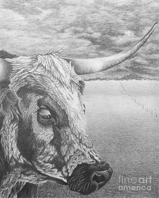 Longhorn Drawing - Untroubled by Chad Keith