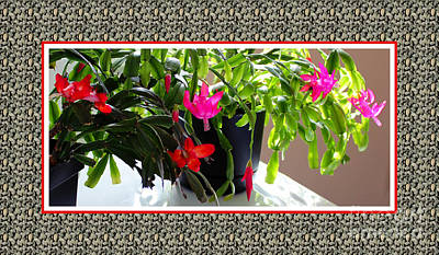 Unusual Simultaneous Bloomers 4 Art Print by Barbara Griffin