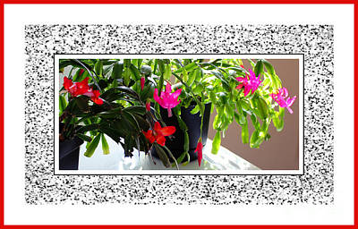 Unusual Simultaneous Bloomers Art Print by Barbara Griffin