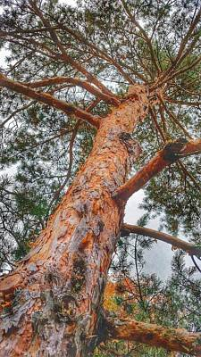 Up A Tree Art Print by Tom Kiebzak