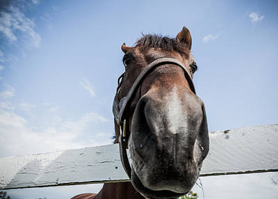 Horse Photograph - Up Close by Alexey Stiop