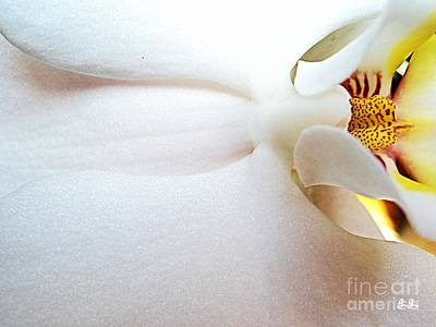 Photograph - Up Close And Personal by Geri Glavis