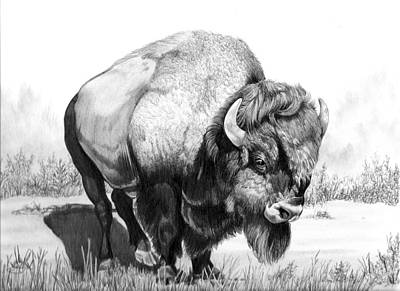 Drawing - Up Close And Personal With Bison by Cheryl Poland