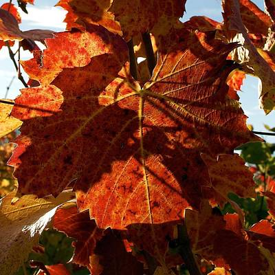 Vevey Photograph - Up Close In Autumn Vineyard by Colleen Williams