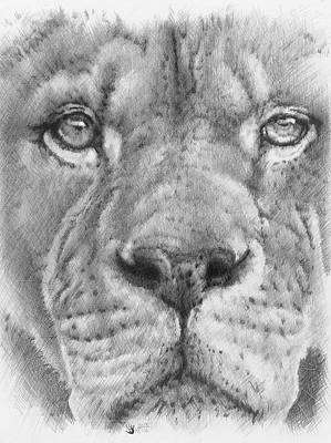 Up Close Lion Art Print by Barbara Keith