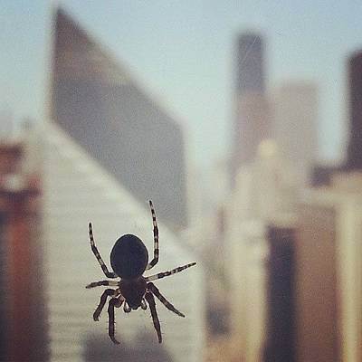 Skyline Wall Art - Photograph - Up Here With The Spiders by Jill Tuinier