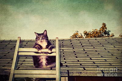 Cat Up On The Roof Art Print