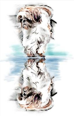 Puppies Digital Art - Up Or Down by Richard Okun