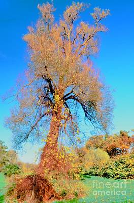 Up Rooted Tree Art Print by Kathleen Struckle