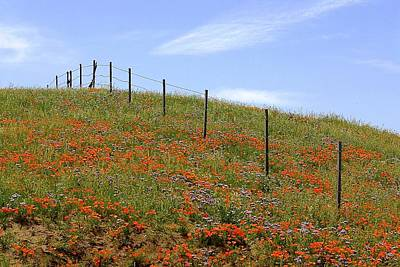 Photograph - Up The Poppy Hill by My Lens and Eye   - Judy Mullan -