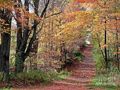 Up The Wooded Lane Art Print