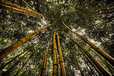 Duke Gardens Photograph - Up Through The Bamboo by Anthony Doudt