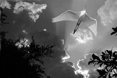 Up Up And Away Bw Art Print