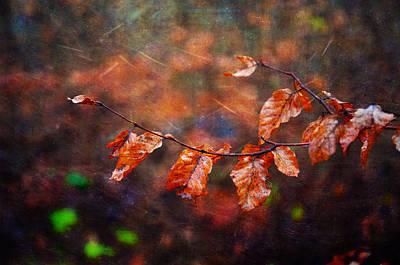 Photograph - Uplifted by Randi Grace Nilsberg