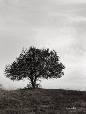 Photograph - Upon A Lonely Hill by Donna Blackhall