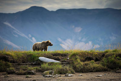 Upon The Bluff Art Print by Chase Dekker Wild-life Images