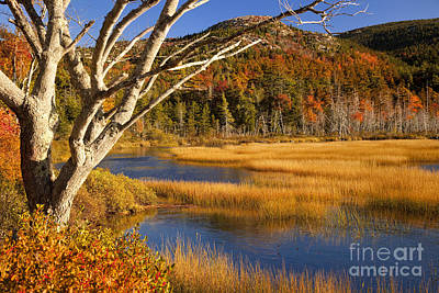 Photograph - Upper Hadlock Pond by Brian Jannsen