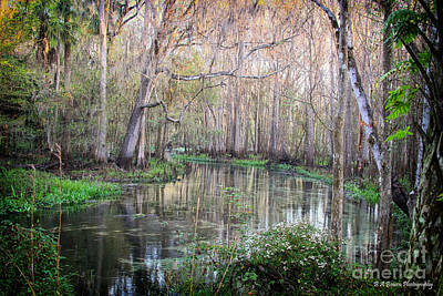 Photograph - Upper Hillsborough River by Barbara Bowen