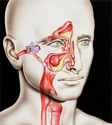 Upper Respiratory Tract Infections Art Print
