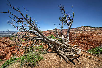 Photograph - Uprooted - Bryce Canyon by Tammy Wetzel