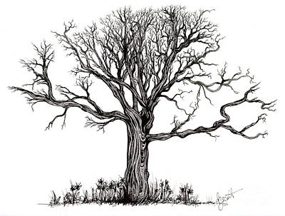 Drawing - Uprooted by Danielle Scott
