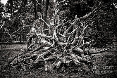 Photograph - Uprooted by Olivier Le Queinec