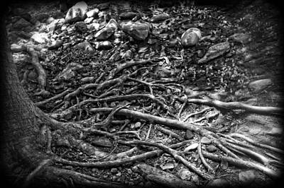 Photograph - Uprooted by Rhonda Barrett