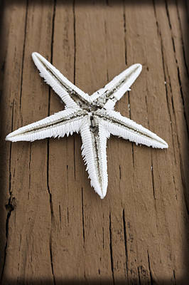 Photograph - Upside Down White Starfish by Karen Stephenson