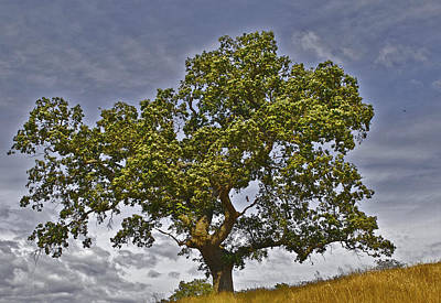 Photograph - Upstanding Tree by SC Heffner