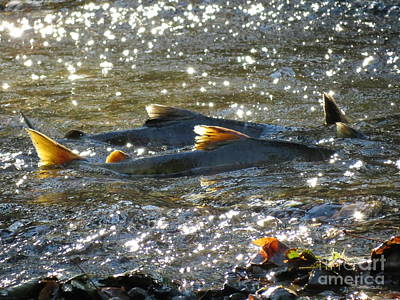 Photograph - Upstream by Gayle Swigart