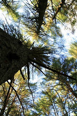 Photograph - Upward View  by Neal Eslinger