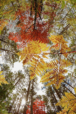 Forest Floor Photograph - Upward View Through Ferns In Pine by Adam Jones
