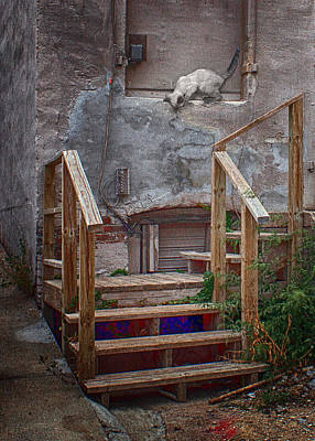 Photograph - Urban Exploration by Nikolyn McDonald