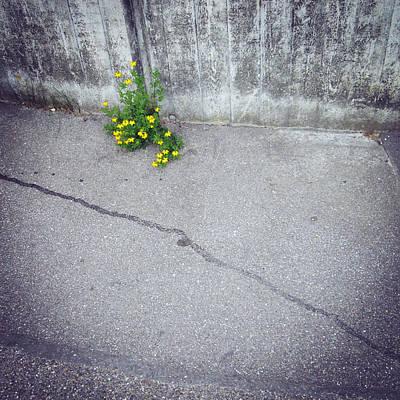 Street Photograph - Urban Flora - Yellow Flower And Grey Asphalt by Matthias Hauser