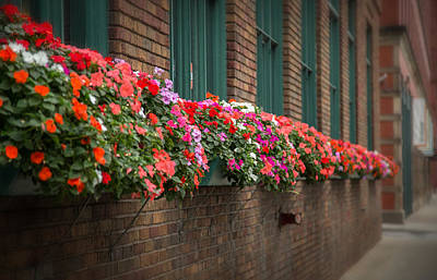 Photograph - Urban Flowers by Dale Kincaid