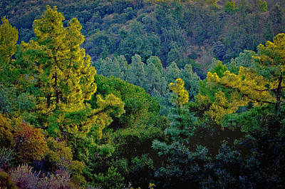 Art Print featuring the photograph Urban Forrest by Joseph Hollingsworth