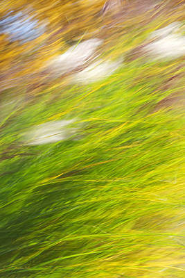 Photograph - Urban Nature Fall Grass Abstract by Christina Rollo