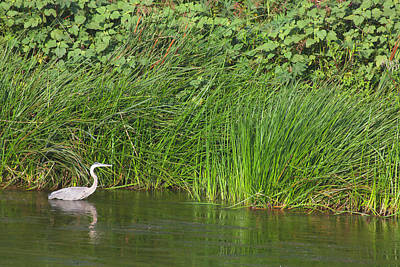 Photograph - Urban Wildlife Habitat - Los Angeles River - 3 by Ram Vasudev