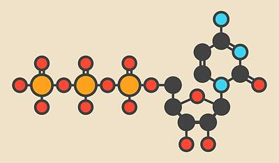 Triphosphate Photograph - Uridine Triphosphate Molecule by Molekuul
