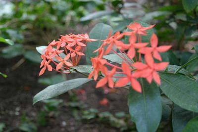 House Photograph - Us Botanic Garden - 121210 by DC Photographer