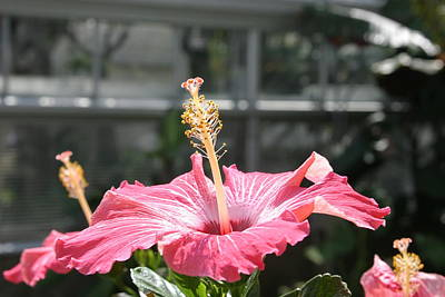 Orchids Photograph - Us Botanic Garden - 121222 by DC Photographer