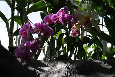 Botanic Photograph - Us Botanic Garden - 121231 by DC Photographer