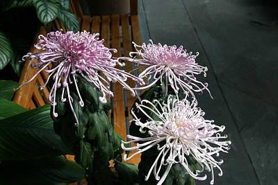 House Photograph - Us Botanic Garden - 121266 by DC Photographer