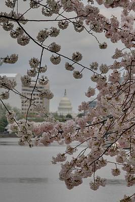 Tidal Photograph - Us Capitol - Cherry Blossoms - Washington Dc - 01137 by DC Photographer